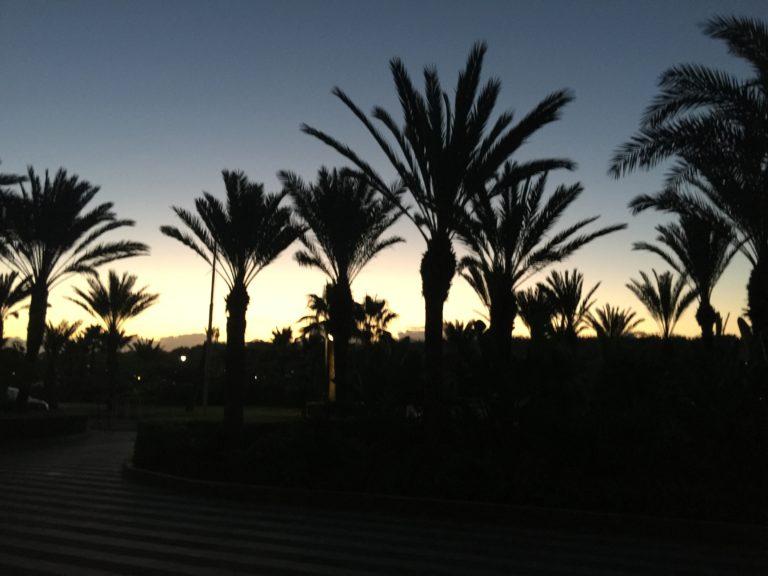 palmiers el jadida maroc
