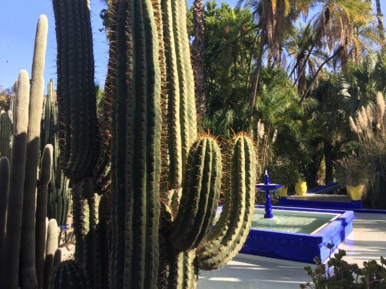 cactus jardin majorelle marrakech maroc