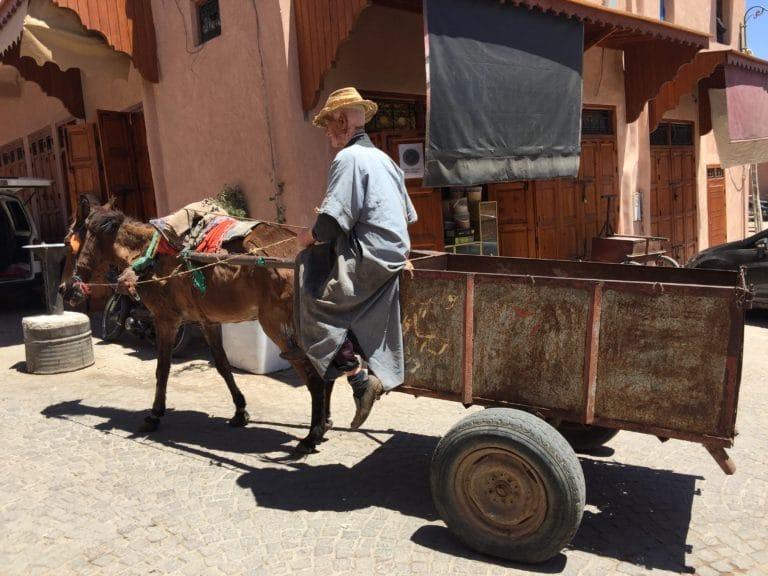 charrette tiree par un ane medina de marrakech maroc